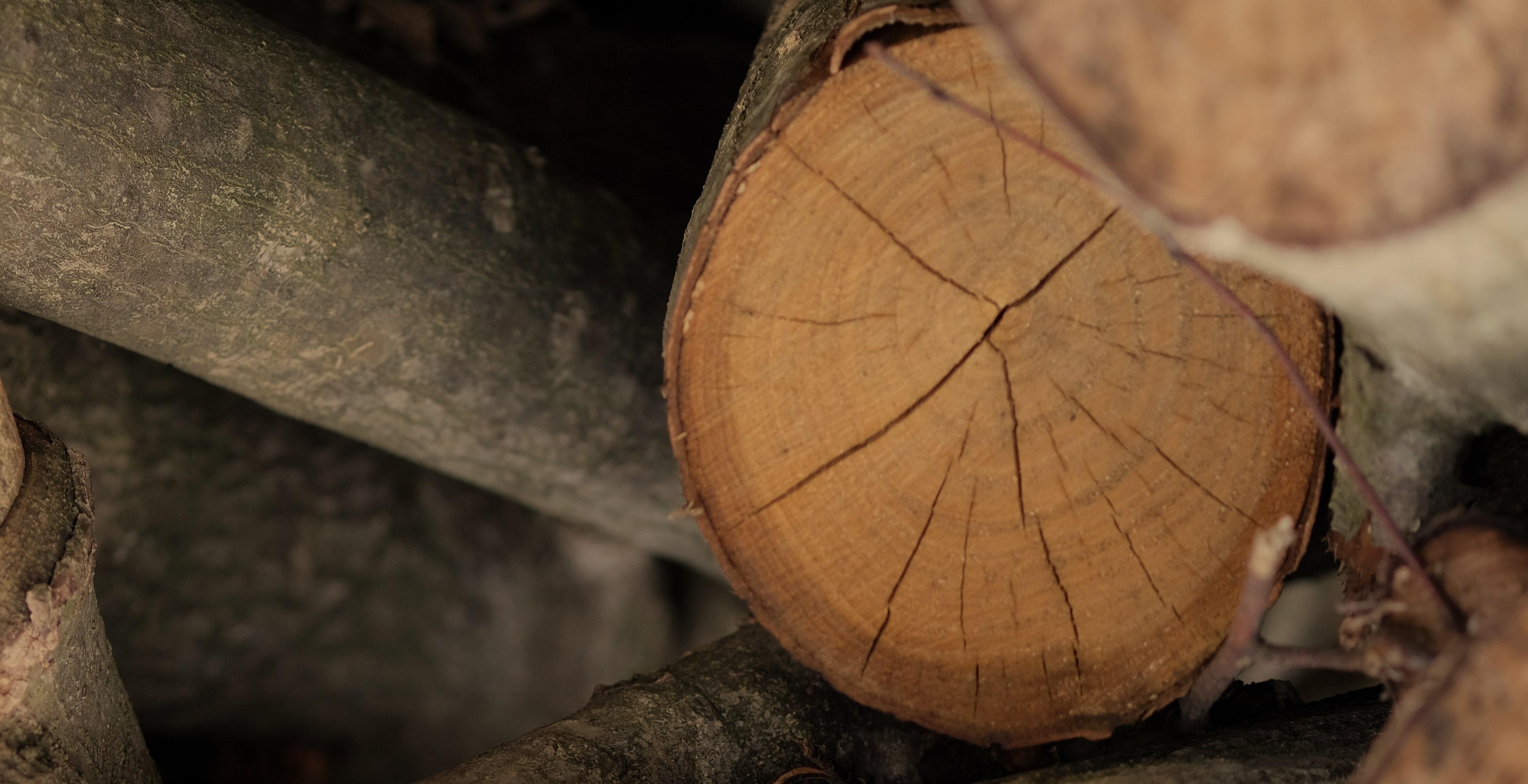 大野木工を知る